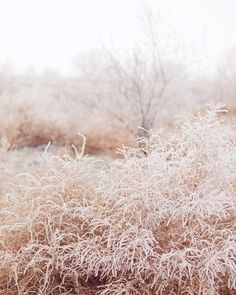 "8 Likes, 2 Comments - Beauty of Action (@beautyofaction) on Instagram: ""Winter fields via #pinterest 📷 by Ciara Richardson  #beautyofactionloves"""