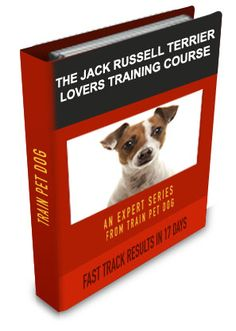 How to train a Jack Russell is not easy. These dogs are feisty! But Jack Russell Terrier training just got easy, Learn our Jack Russell training secrets. how to train your dog Dog Training Books, Training Your Puppy, Dog Training Tips, Jack Russell Puppies, Jack Russell Terrier, Terrier Dog Breeds, Terriers, Terrier Mix, Pet Dogs