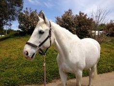 Post workout grooming for your horse - save water, create more shine! visit proequinegrooms.com