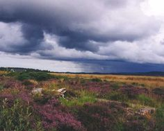 "Culloden (Gaelic Cùl lodain) - site where the Jacobite cause, fighting to put a Stuart on the throne, suffered its mortal wound 16 April 1746 & ""Bonnie Prince Charlie"" had to flee to France & never return to Scotland. After Culloden, everything about the Highland way of life was banned - the claymore, the bagpipe, & even the wearing of tartans. Fortunately, the ban on tartans was lifted in 1782, & in 1843 Queen Victoria appointed the first ""personal piper to the Sovereign"" of Great Britain."