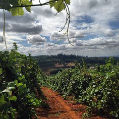 Wandering the vineyards in Willamette Valley, OR. Photo courtesy of dls510 on Instagram.