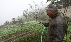 Dan Collyns: An initiative to collect moisture from the thick sea mist around Lima represents an inventive, cost-effective solution to the ever-expanding Peruvian capital's shortage of water