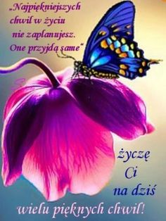 Good Morning, Funny Quotes, Bee, Bouquet, Humor, Messages, Good Morning Funny, Pictures, Buen Dia