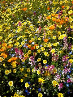 Wild flowers that delight.
