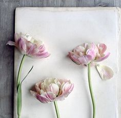 Oh my! This stunning image stopped me in my tracks today! by @sarahgardenerphotography in #UnderTheFloralSpell #tulips