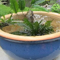 Make a Water Bowl Garden | Garden Club #tabletop #garden #water #aquatic #patio #garden #jardin #garten #DIY