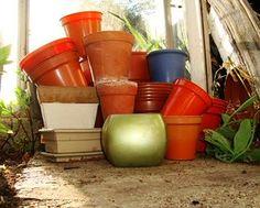 How to repot houseplants?  #repotting #houseplants
