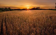 sunset - Full HD Background