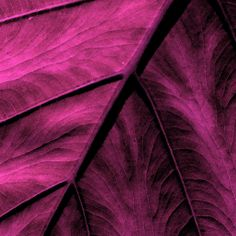 Elephant Leaf Abstract Art Print by Bonnie Bruno. All prints are professionally printed, packaged, and shipped within 3 - 4 business days. Leaf Wall Art, Pink Wall Art, Aesthetic Colors, Aesthetic Pictures, Abstract Canvas, Abstract Print, Art Print, Mauve, Lucky Colour