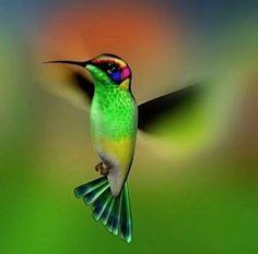 Hummingbirds fly freely and abundantly in Trinidad.