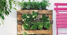 Horta vertical feita de palet.