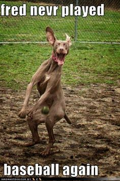 Funny Dog Photos with Captions Never play baseball again