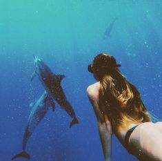Could really go for a dolphin dive right about now... Aquatic | Water | Inspiration | Katharine Kidd