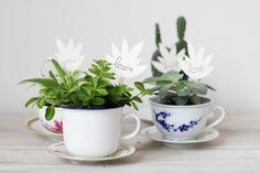 plantes grasses dans une tasse DIY en Français