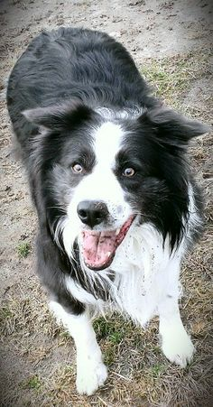 """Cullie boy sooooo very happy that the rain has stopped so we could go out and play """"mudbowl""""...lol!!"""