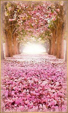 SAKURA - SYMBOL KRÁSY A POMINUTEĽNOSTI Čerešňové kvety sú zvestovateľmi príchodu novej jari. Symbolizujú príchod nových síl prírody, nových príležitostí, bohatstva a hojnosti. Kvôli krátkej dobe kvitnutia, sú tiež symbolom dočasnosti a pominuteľnosti života. Ako jedny z mála kvetov vedia aj dôstojne umierať, lebo keď ich lupienky opadnú, zostávajú i na zemi dlho krásne.  http://dao-fengshui.eu/podujatie/den-bohyne-kvetov/