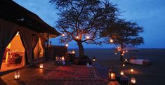 Tanzania Experience - Wild Root Safaris is a tour company that specializes in Tanzania Safaris and Tanzania Expedition. Enjoy Tarangire Park for game drives, Lake Manyara for game drives, Serengeti plains for game drives, Ngorongoro crater's coffee walking.