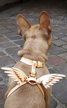 Niels Peeraer Wings Leather Dog Harness