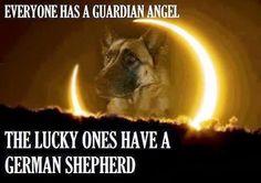 Sayings About German Shepherds | German Shepherd Dog