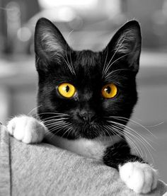 Did you just say cats! Cats are the most hilarious and notorious creatures. Pretty Cats, Beautiful Cats, Animals Beautiful, I Love Cats, Crazy Cats, Cool Cats, Chat Bizarre, Baby Animals, Cute Animals