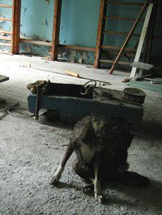Chernobyl 2005.