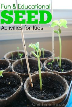 This post is full of fun and educational seed activities including tips for growing seeds & science, sensory & arts and crafts seed activities. Seed Activities For Kids, Educational Activities For Kids, Nature Activities, Spring Activities, Science For Kids, Outdoor Activities, Learning Activities, Science Fun, Outdoor Education