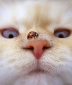 Mr White when a bug lands on his face. =^..^= (photo source): http://imgur.com/r/aww/DdzdWQe