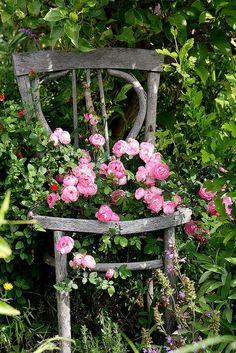 My 'Raubritter' Rose, grown from a cutting, is leaning on an old chair. My robber knight rose the I pulled from a cutting holds on to an old chair 'shabby chic Garden Cottage, Rose Cottage, Garden Chairs, Garden Planters, Flower Planters, Balcony Garden, Dream Garden, Garden Art, Pink Garden