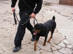 Our next course: EDI Level 2 GP Security Dog Handler Days) - - February 2013 Training Day, Bristol, Dogs, February, Animals, Animales, Animaux, Pet Dogs, Doggies