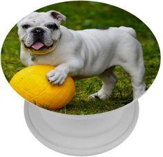 French Bulldog, Dogs, Animals, English Bulldogs, Animales, Animaux, French Bulldog Shedding, Pet Dogs, Bulldog Frances