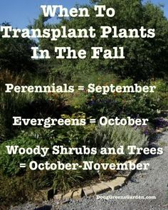 When to transplant garden plants in the fall from DougGreensGarden. Fall Plants, Garden Plants, Outdoor Plants, Outdoor Gardens, Fall Perennials, Patio, Backyard, Autumn Garden, Trees And Shrubs