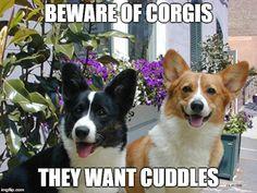 www.whateverydogdeserves.com wp-content uploads 2016 07 beware-corgis-meme.jpg