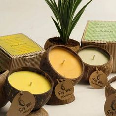 Coconut Shell Scented Candles