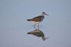 Bird, Photography, Photograph, Birds, Fotografie, Fotografia, Birdwatching, Photoshoot