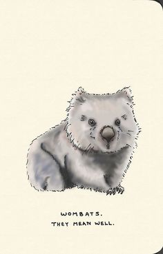 by Jason Sweeney Animal Paintings, Animal Drawings, Cute Wombat, Cute Disney Drawings, Pyrography Patterns, Australian Animals, Baby Art, Cute Illustration, Cat Memes