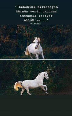 King Horse, Islamic Quotes, Horses, Animals, Nature, Life, Acupuncture, Animales, Naturaleza