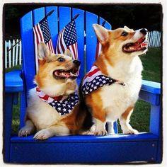 A Very #Corgi 4th of July! Peyton and Eli on The Daily Corgi