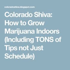 Colorado Shiva: How to Grow Marijuana Indoors (Including TONS of Tips not Just Schedule)