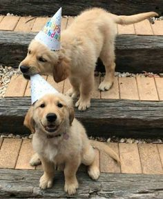 there can only be one birthday boy