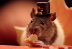 Watch a hamster enjoy a Thanksgiving feast with his friends