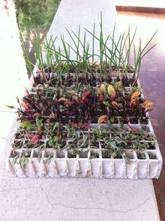 Debido a la falta de crecimiento de nuestras plantas nuestro asesor nos ha ayudado con un nuevo germinador