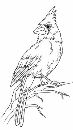 Two Red Cardinals coloring page from Northern cardinal