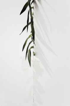 Dirt. Palm Fronds. Cast Skin. | Artist / Künstler: Ryan Estep |