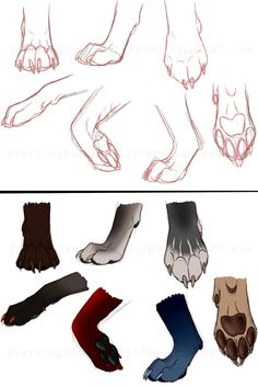 CANINE PAWS -reference- by *NinjaKato on deviantART