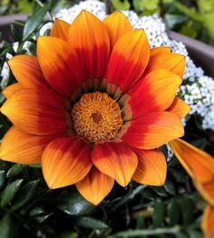 Orange color flowers