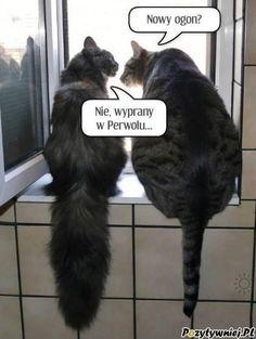 pl – Kot to nie zwierzę, to stan umysłu… Wtf Funny, Funny Cats, Funny Memes, Hilarious, Animals And Pets, Funny Animals, Cute Animals, Science Memes, Weird Words