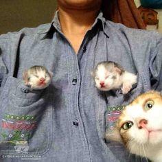 Photobombing Mama Cat