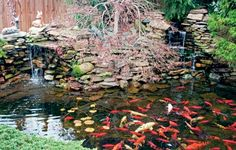 DIY-Build a small pond in your backyard