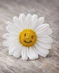 Voll süß der kleine Blumen - Smiley! ☺