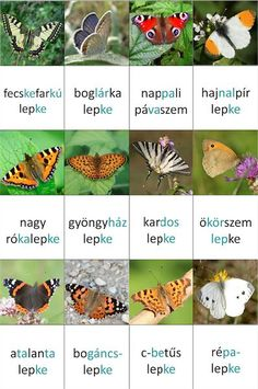 Letölthető memória kártyák - Down-szindrómával kapcsolatos hírek, információk, tények Diy For Kids, Crafts For Kids, Tree Day, Insect Crafts, Activity Sheets, Reggio Emilia, Life Cycles, Earth Day, Animals And Pets